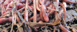 worms-cropped